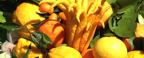 I frutti della salute. Virtù e proprietà degli agrumi freschi e trasformati di Sicilia