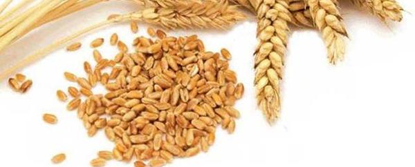 Pseudo-cereali: che cosa sono, proprietà nutrizionali e utilità nel diabete