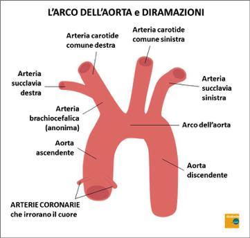 arco-aorta-e-diramazioni