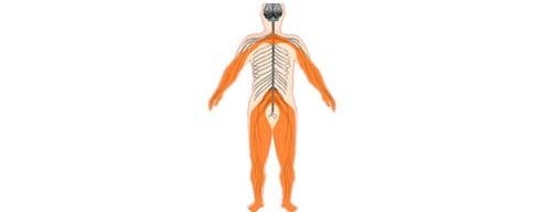 aree-neuropatie-2