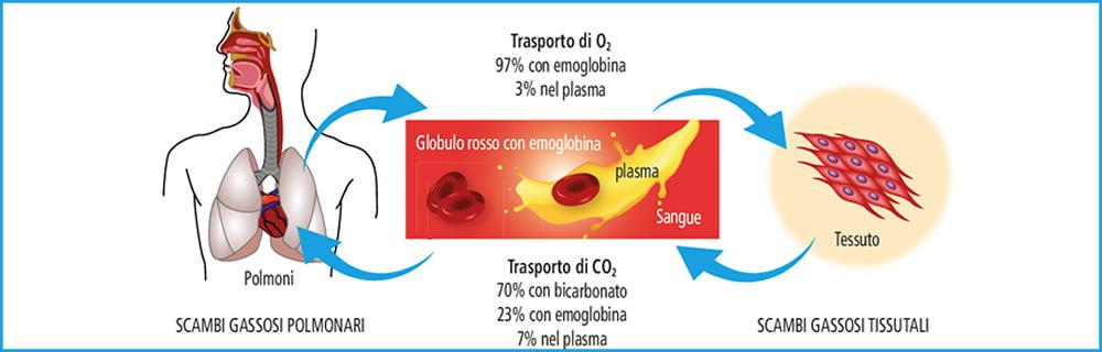speciale emoglobina glicata-1