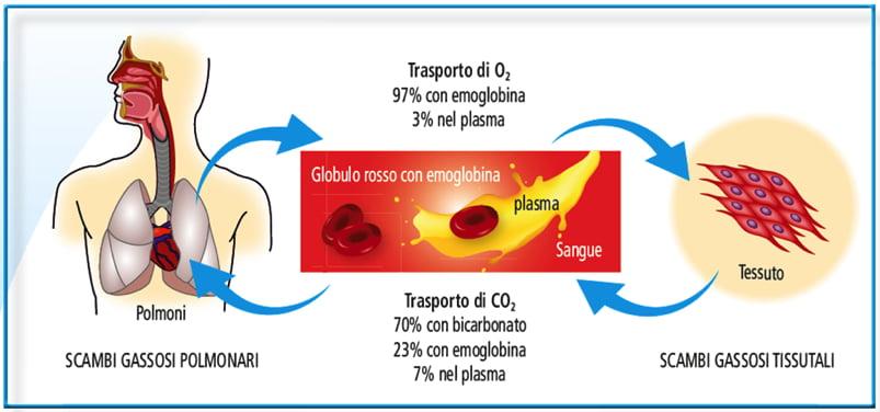 test emoglobina