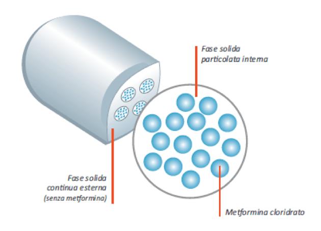 compressa-di-metformina-a-lento-rilascio