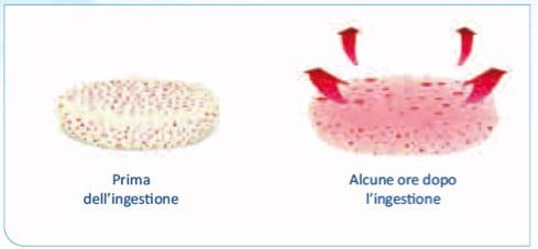 idratazione-e-lento-rilascio-della-metformina-dopo-assunzione