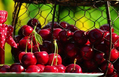 Ciliegie: seducenti, gustose e …. ricche di antiossidanti