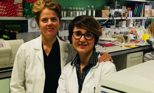 Diabete tipo 2, obesità e immunometabolismo: al San Raffaele DRI in corso una ricerca d'avanguardia