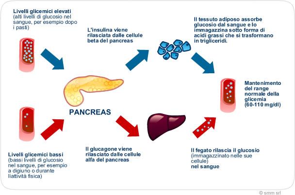 La regolazione della glicemia
