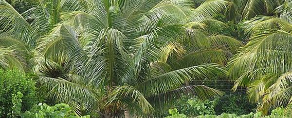L'olio di palma: cos'è, dove si trova e potenziali rischi per il diabete di tipo 2