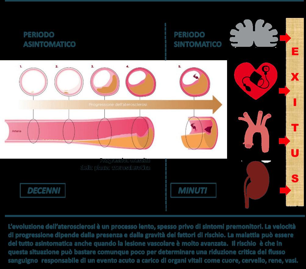 erezione del colesterolo