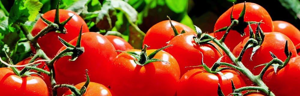 Pomodoro, il re dell'estate è ricco di licopene
