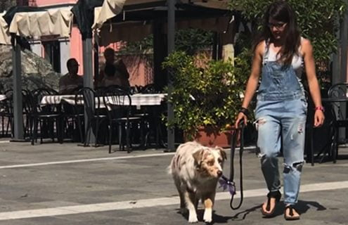 Cani e diabete tipo 1: la storia di Silvia e Smaug